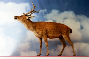 Stuffed deer on display in museum against background showing clouds in a blue sky